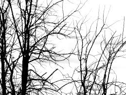 free black and white tree branch plant nature texture texture l t