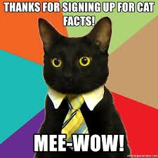 Cat Facts Meme - thanks for signing up for cat facts mee wow business cat