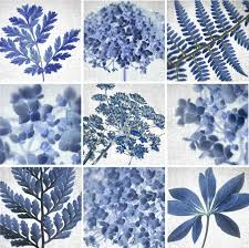 ghost fern fine art print botanical blueprint u2013 june hunter images