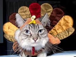 40 animals who are ready for thanksgiving huffpost