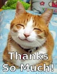 Meme Thank You - thank you cat meme thank you meme pinterest meme