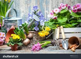 spring flower gardener planting spring flower stock photo 256623721 shutterstock