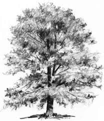 pictures pencil sketch of tree drawing art gallery
