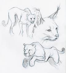 56 best animal images on pinterest sketches drawings and cats