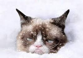 Grumpy Cat Snow Meme - grumpy cat snow blank template imgflip
