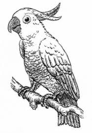 parrot coloring pages the beautiful bird gianfreda net
