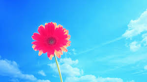 hd images of flowers bright flower flower wallpapers nature images plants hd