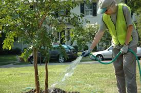 watering trees http www acenature how to plant a tree