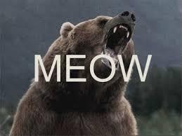 Smokey The Bear Meme Generator - smokey the bear meme creator the best bear 2018