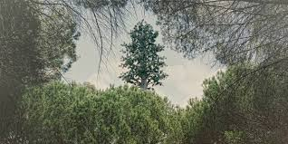 ttees meaning cellphone towers disguised as trees are a puzzling attempt at