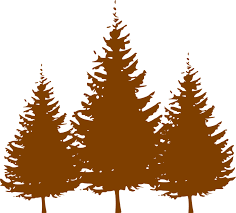 brown tree conifers vector graphics pixabay free images