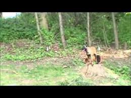 belgian sheepdog training guide beginner level obedience training with belgian malinois puppy