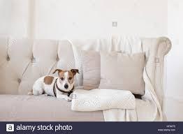 levrette sur canapé levrette sur canapé 100 images la meilleure vidéo canapé