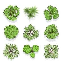 set trees top view for landscape vector image