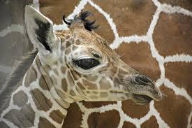 baby animals renovations contribute to fort wayne children u0027s