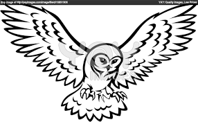 luxury how to draw a owl flying 59 on with how to draw a owl