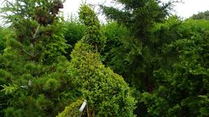 What Is A Topiary Tree How To Make A Spiral Topiary From Boxwood Youtube