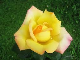 June Flowers - june flowers 10 by love1008 on deviantart