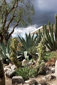 Succulent And Cacti Pictures Gallery Garden Design A Waterwise Cactus Garden Photo Gallery Gallery Garden Design