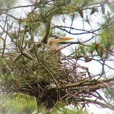 South Carolina wildlife tours images Nature tours in beaufort sc wildlife viewing and photography jpg