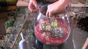 create a colorful succulent terrarium youtube
