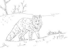 red fox snow coloring free printable coloring pages
