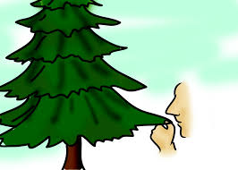 100 elgin il christmas tree farm kane county illinois 1870