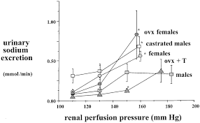 Male And Female Anatomy Differences Gender Differences In The Regulation Of Blood Pressure Hypertension