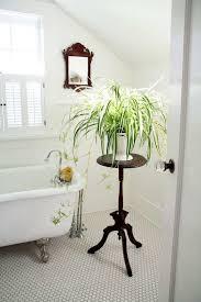 plante verte chambre à coucher plante verte chambre a coucher haqiqat info
