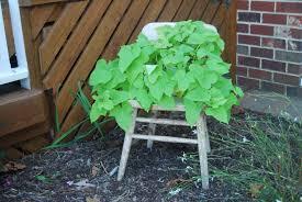 Vine Chair Wooden Child U0027s Chair These Days Of Mine