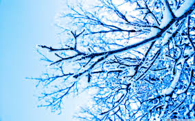 snowy tree pictures wallpaper 2560x1600 31809