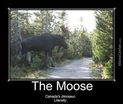 Moose Meme - the majestic moose by jeffreyharvey meme center