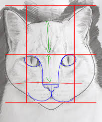 dessiner un portrait de chat simplement dessin animaux