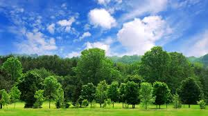 how trees can help fight global warming
