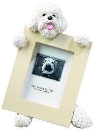 bichon frise vs yorkie 85 best pet images on pinterest bichons bichon frise and puppies