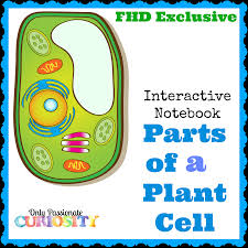 free plant cell interactive notebook instant download free