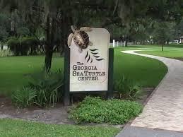 visit jekyll island georgia u0027s sea turtle center more things to