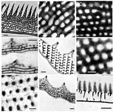 anatomically diverse butterfly scales all produce structural