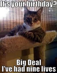 Mad Kitty Meme - best happy birthday cat meme