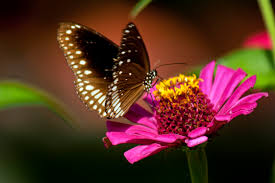 butterfly and purple flowers bff1 photofo