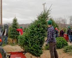 fresh cut christmas trees butler county ohio