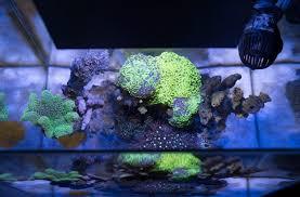 fluval edge marine light zen aquarium project zen garage