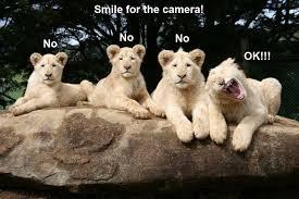 Funny Animal Meme - image funny animal meme pictures 012 016 jpg animal jam wiki