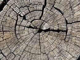 wood tree rings images Free images wood texture leaf line soil circle art worn jpg