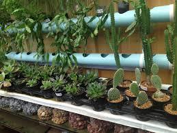 Cactus Garden Ideas Indoor Cactus Garden The Gardens