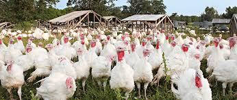 thanksgiving turkey pre order eastside food co op