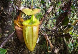 Plants In The Tropical Rain Forest - the tropical rainforests of borneo indoneo tours in indonesia