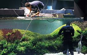 amano aquascape routine maintenance in the aquarium daily check for any missing