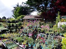california native plants for sale nursery on the plaza visit mcbg inc 2017 fort bragg california