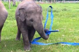 realtree ribbon elephant plays with ribbon realtree